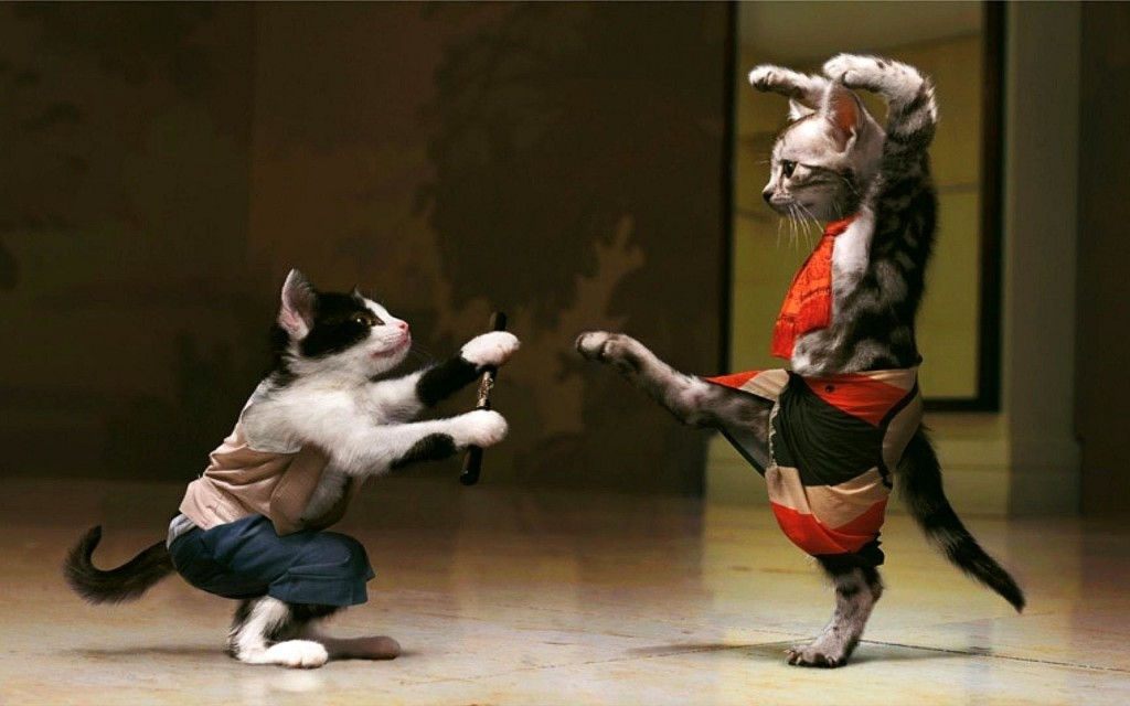 Funny-Cats-Fight